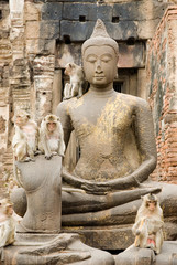 Buddha and monkey 2.