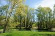 paesaggio alberi 1561