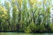 paesaggio alberi 1577