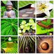 Wellness Collage Spa Budhha