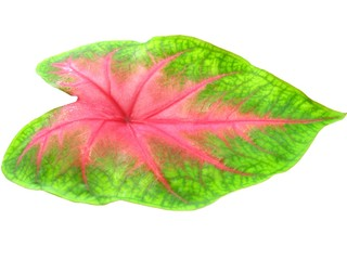artistic leaf isolated