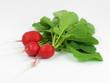Gemüsegarten : Radischen