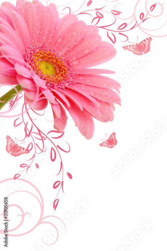 fototapete gerbera blumenhintergrund fototapeten aufkleber poster leinwandbilder. Black Bedroom Furniture Sets. Home Design Ideas