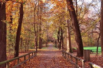 Sentiero del parco di Monza