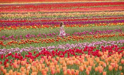A girl walking in tulip field