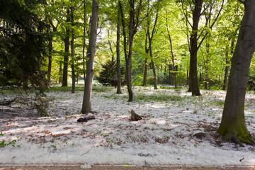 Pollen / Allergie im Wald