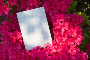 letter[azalea]_35