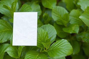 letter[hydrangea]_05