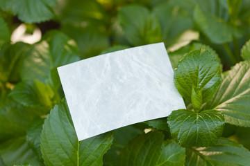 letter[hydrangea]_02