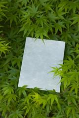 letter[maple]_32