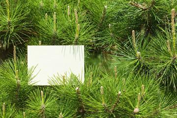 letter[pine]_09