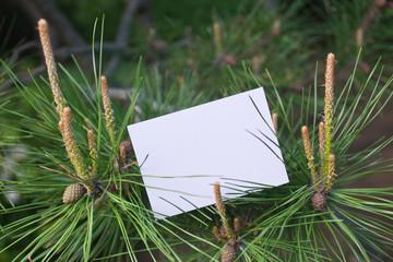 letter[pine]_03