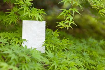 letter[maple]_43
