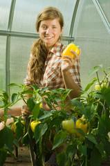 girl is picking   pepper