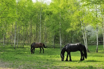 animals, brown, dark, farmland, landscape, nature, horses