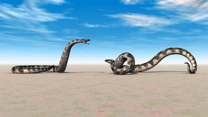 Zwei Riesenschlangen