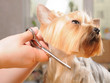 Professional grooming - 31923457