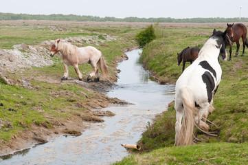Pferde am Graben
