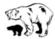 polar bear growling vector illustration