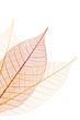 Nervures feuilles rouge et crème