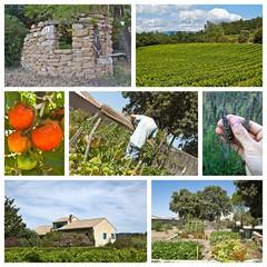 Composition de photographies de jardinage en Provence
