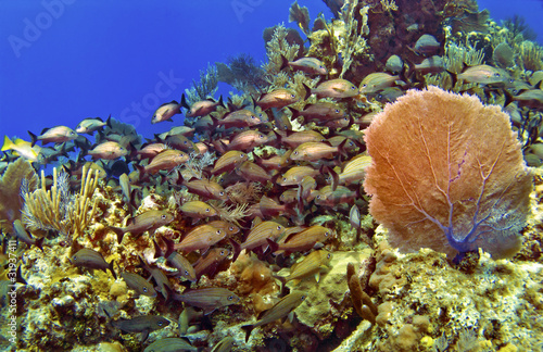 School of Fish and Sea Fan in Cayman Brac