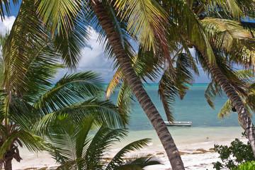 plage sous les cocotiers aux Seychelles