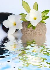 fleurs blanches de frangipanier, feuille de schefflera , galets