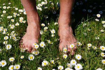 Männerfüße auf der Gänseblümchenwiese