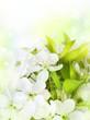 Spring Flowers border. Blossom