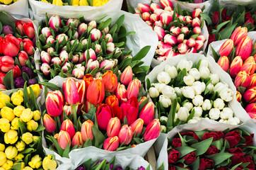tulips market