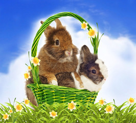 rabbits in basket with yellow jonquils