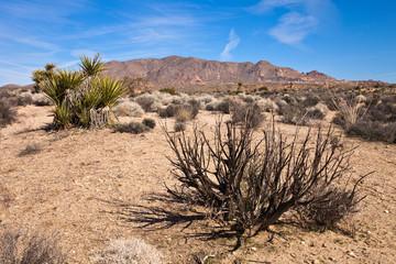 Sonora Desert Vegetation