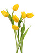 Yellow tulips on white background