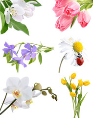 Flower collage on white background