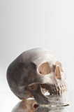 Anatomically correct medical model of the human skull poster