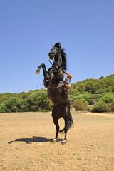 cavallo imbrizzarrito