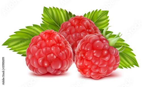 Vector illustration of ripe raspberries.