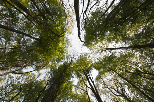 Abstract forest canopy