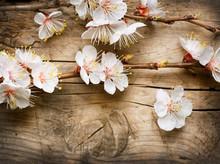 Bois avec fleurs de printemps