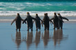 Group of King Penguins on the Beach - 31987428