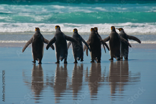 Tuinposter Pinguin Group of King Penguins on the Beach