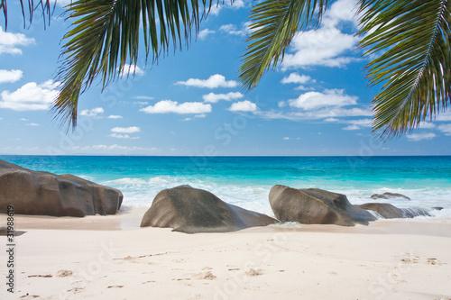 plage des Seychelles sous les palmes des cocotiers