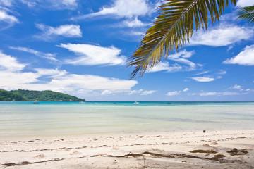 plage sous les palmes aux Seychelles