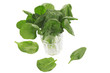 fresh spinach in a glass