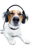 Fototapety Dog listening music