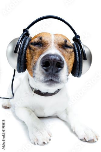 Fototapeta Dog listening music