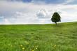 Einzelner Baum auf Frühlingswiese mit Bewölkung