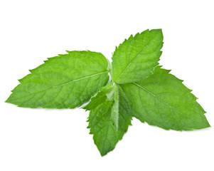 fresh mint leaf isolated