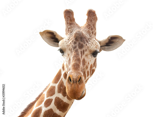 Fotobehang Giraffe giraffe isolated on white background